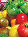 tomatoes98x127