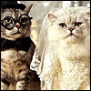 Groom-&-Bride-cats