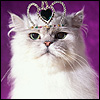 Tiara-Cat