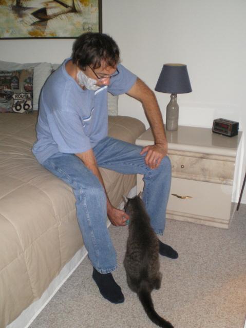 vet advice for cats
