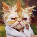 Scruffy-Cat