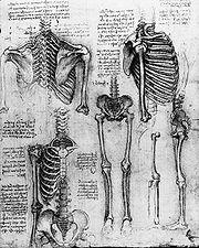180px-Leonardo_Skeleton_1511